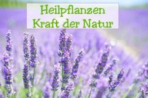 Heilpflanzen-Kunde Pflanzen von A-Z helfen und heilen